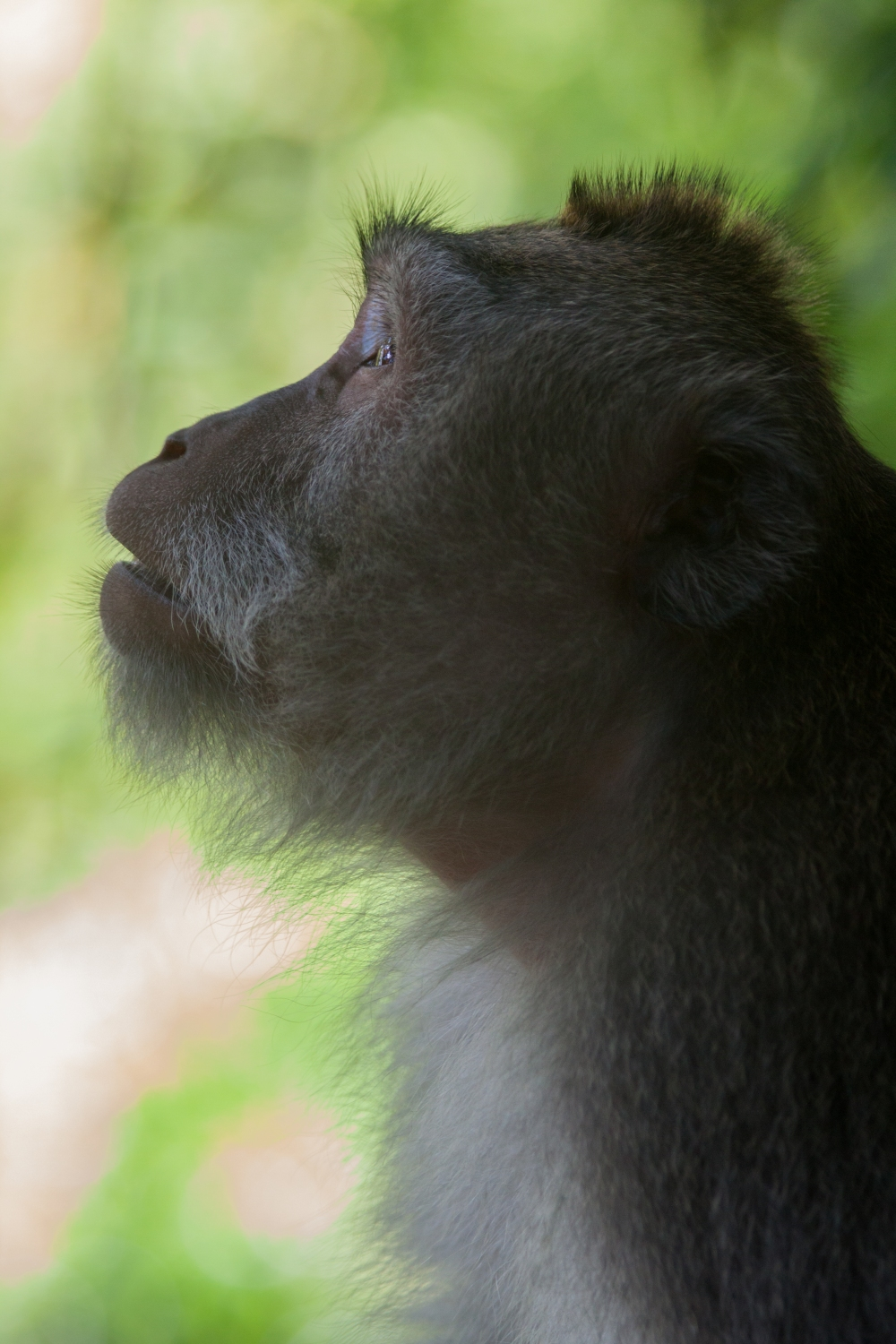 Monkey_Portrait_Jungle_Bali_Travel_Photographer