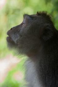 Monkey_Portrait_Jungle_Bali_Travel_Photographer